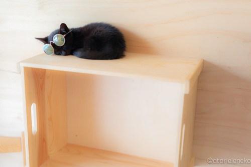 アトリエイエネコ Cat Photographer 43067398122_6b83bef335 1日1猫!おおさかねこ俱楽部 里親様募集中 魔法使いのバジルちゃん♪ 1日1猫!  黒猫 里親様募集中 猫写真 猫カフェ 猫 子猫 大阪 初心者 写真 保護猫カフェ 保護猫 ニャンとぴあ スマホ キジ猫 カメラ おおさかねこ倶楽部 Kitten Cute cat