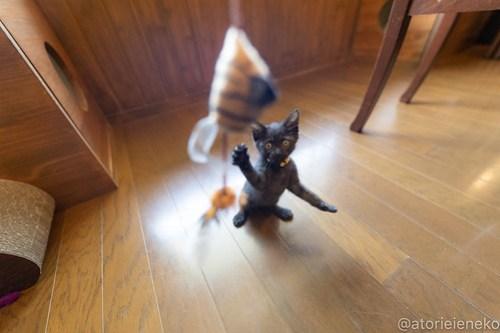 アトリエイエネコ Cat Photographer 43355749892_a34dab8dac 1日1猫!CaraCatCafe天使に会いに行って来ました♪ 1日1猫!  里親様募集中 猫 子猫 大阪 初心者 写真 保護猫カフェ 保護猫 スマホ カメラ Kitten Cute cat caracatcafe
