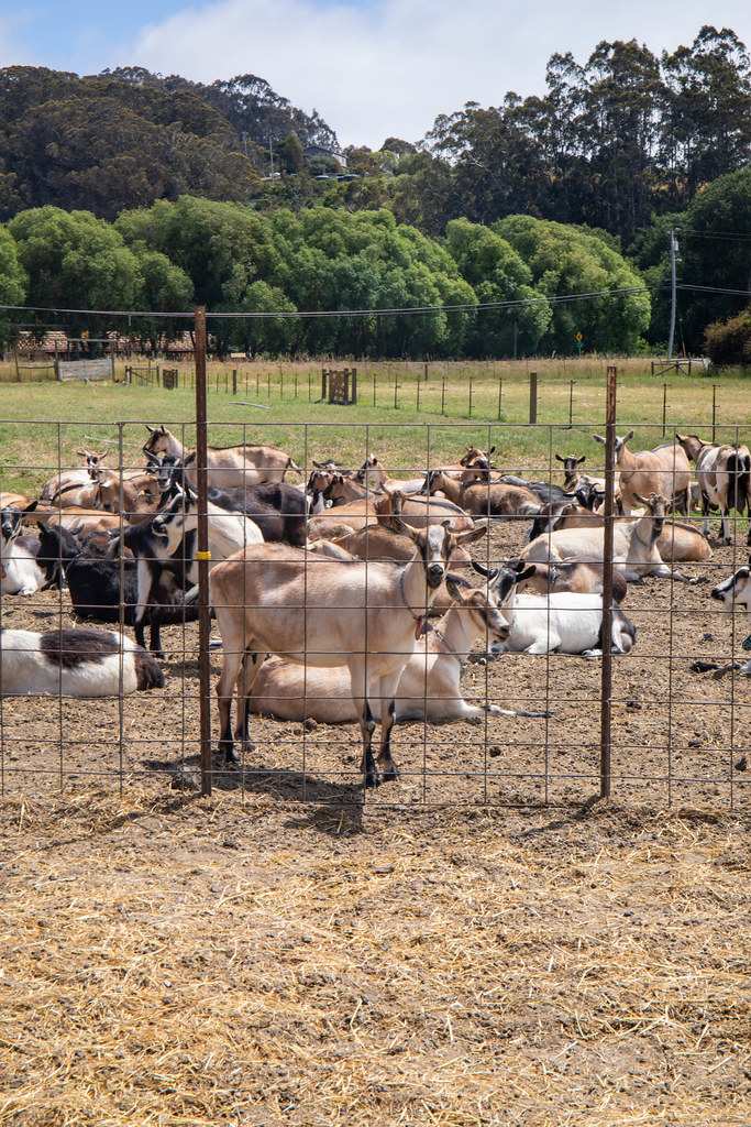 07.15. Pescadero Farms