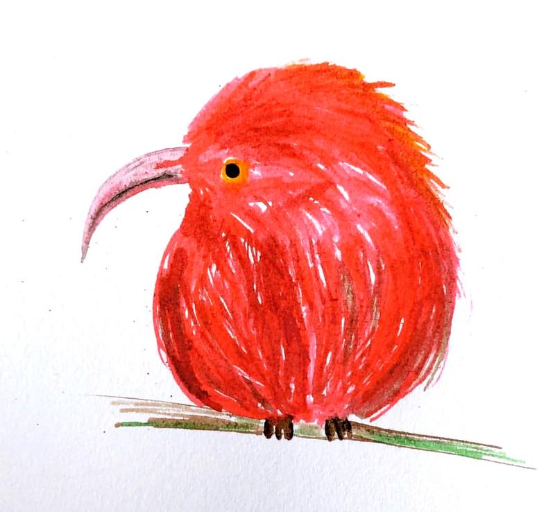 'I'iwi / scarlet honeycreeper