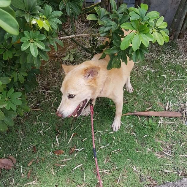 Doggo halt (1)