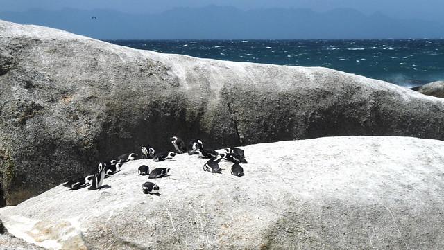 Simon's Town: Boulder Beach Pinguin Colony