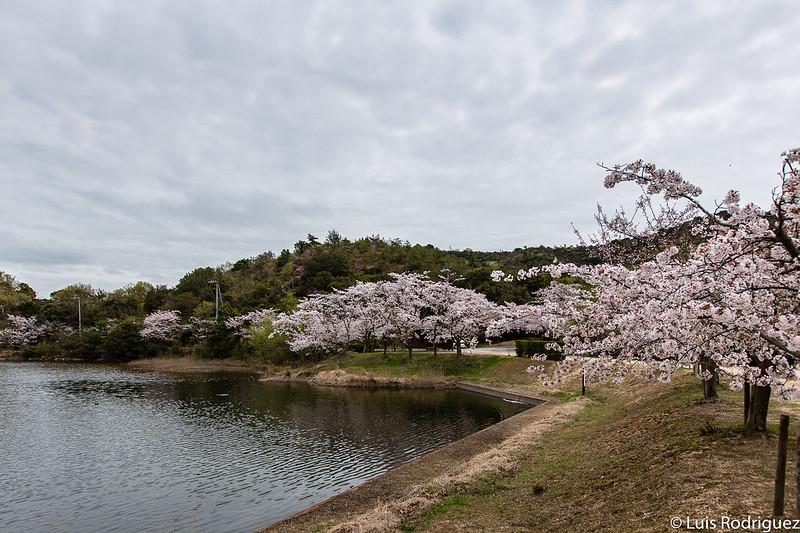 Parque Sakura no Meikyu