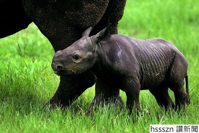 black-rhino_775_518