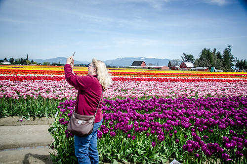 Skagit Valley Tulips-51