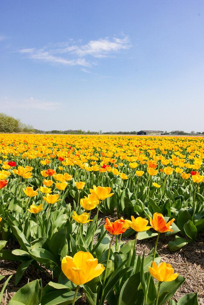 noordwijk_kukkapelto3