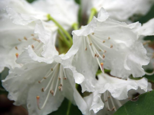 2018-05-20_WV_Botanic_Garden_14