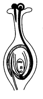 ncert-solutions-class-10th-science-chapter-8-organisms-reproduce-13