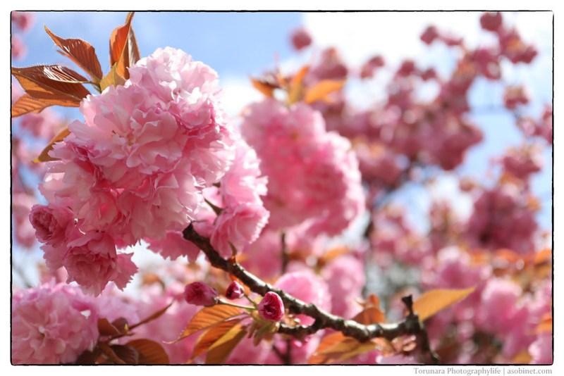 Canon EOS KISS M-IMG_4003-Edit-