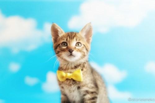 アトリエイエネコ Cat Photographer 26999682307_e71dc4d9e9 1日1猫!ニャンとぴあキャッツ 里親様募集中のタイくん♪ 1日1猫!  里親様募集中 猫写真 猫カフェ 猫 子猫 大阪 初心者 写真 保護猫カフェ 保護猫 ニャンとぴあ スマホ キジ猫 カメラ おおさかねこ倶楽部 Kitten Cute cat