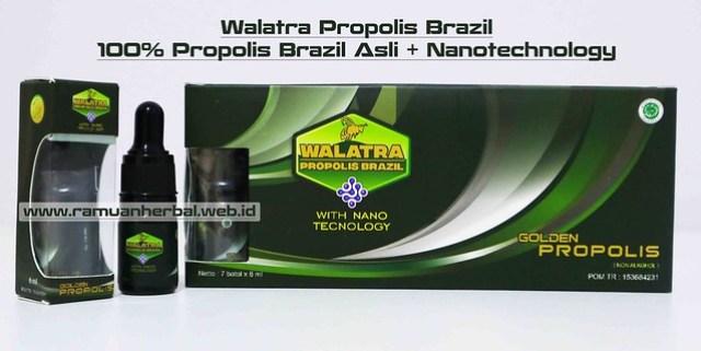 Harga dan Cara Pemesanan Propolis Brazil