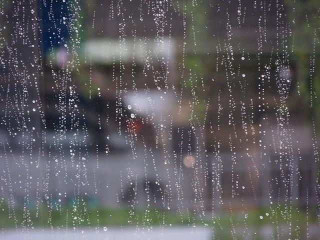 梅雨に留守番している犬から見た窓