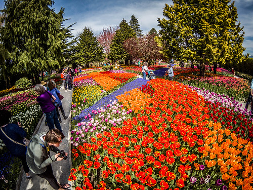 Skagit Valley Tulips-162