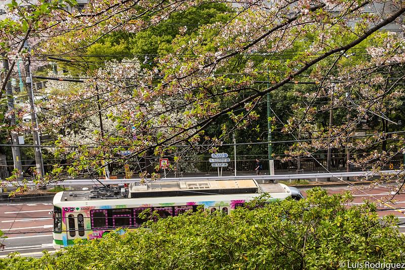 Linea-Toden-Arakawa-Tokyo-Sakura-Tram-42