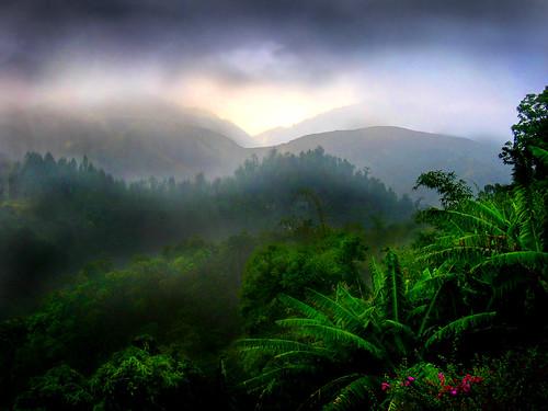 Rain on the Rain Forest