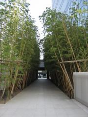 Bambou gaienmae_6