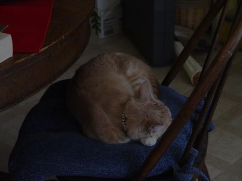Nutmeg asleep on the kitchen chair