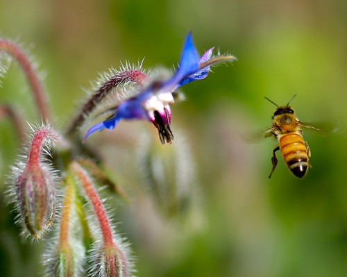Bee Catch! by da100fotos