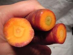 Carrot Bottoms