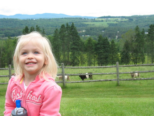 Bubby a cow field