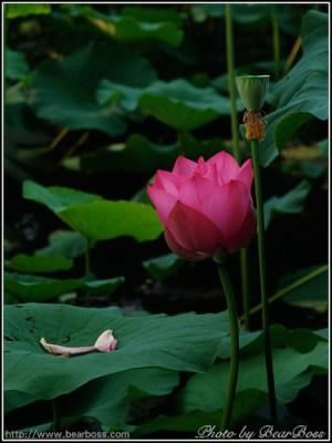flower_10.jpg