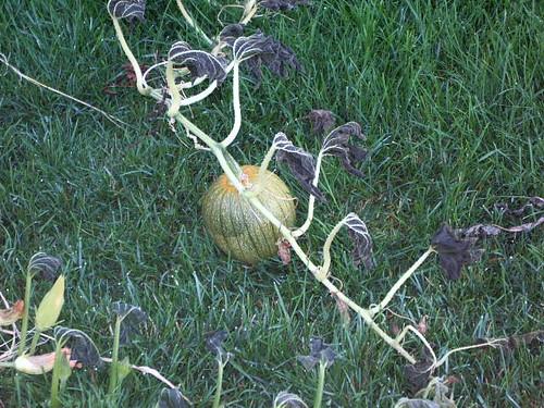 My Dead Pumpkin