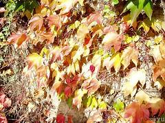 秋天 - Autumn - Herbst
