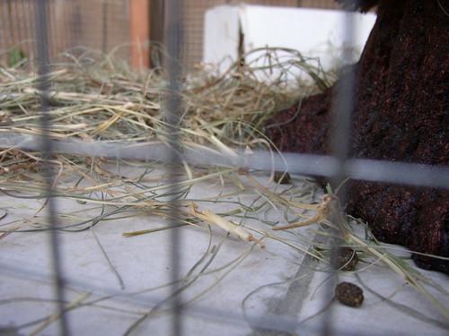 rabbit house proof