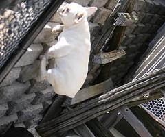Tula Climbs the Wall