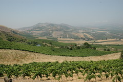 Sicily vineyard landscape view