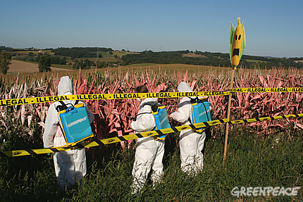 Greenpeace activists paint a field of illegally grown GM corn to expose its location in France
