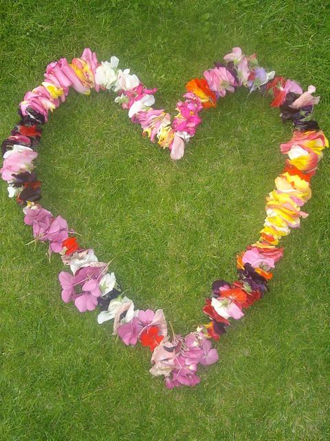 flower heart, STEF MCK, CC
