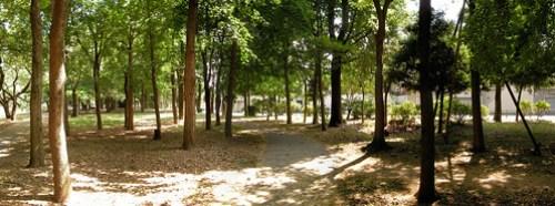 Forest in Zenpuku-ji park