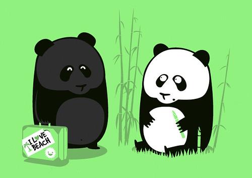 Panda moreno