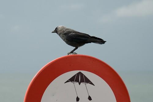 Verboden te vliegen