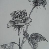 點畫_玫瑰花