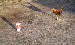 Kentucky Fried chickens