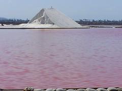 mt salt and the pink ocean