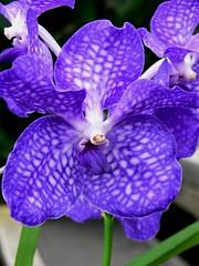 Royal Botanic Gardens Kew 17062007-069