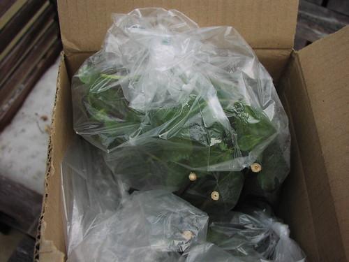 Stone Silo Shipment - still in box