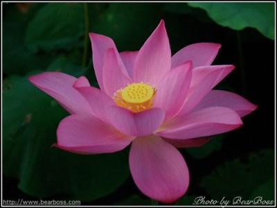flower_08.jpg