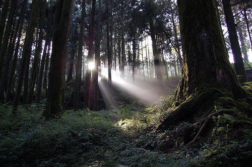 Alishan - the light