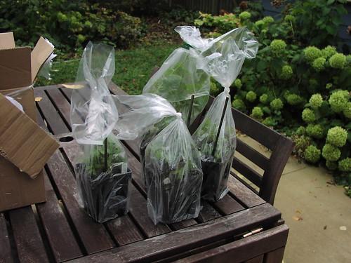 Stone Silo plants