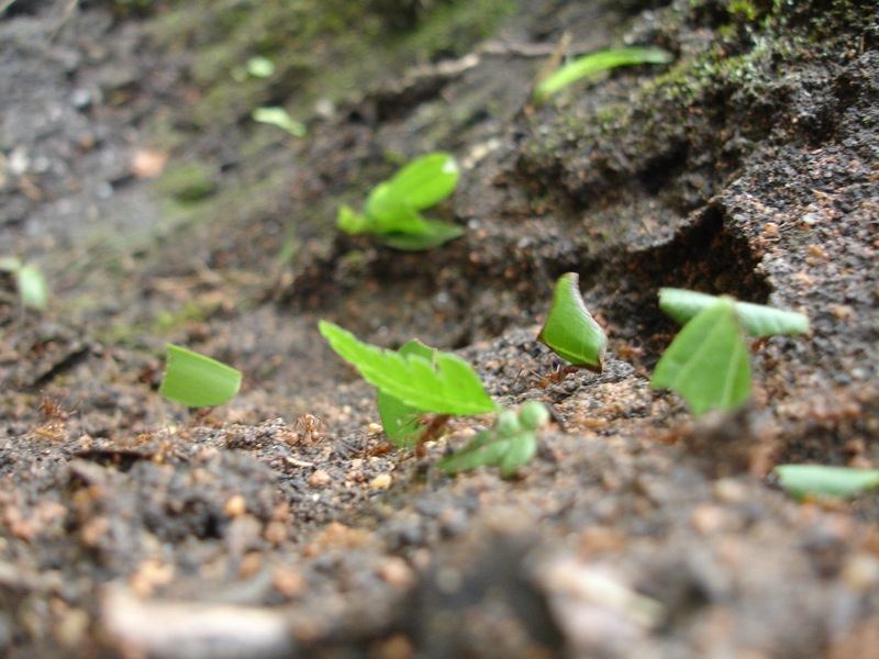 Hormigas Parque Nacional Podocarpus