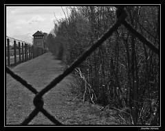 Dachau - Torre