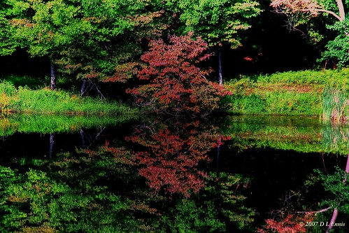 Reflect the Dogwood