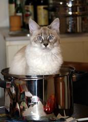 Lola à la casserole