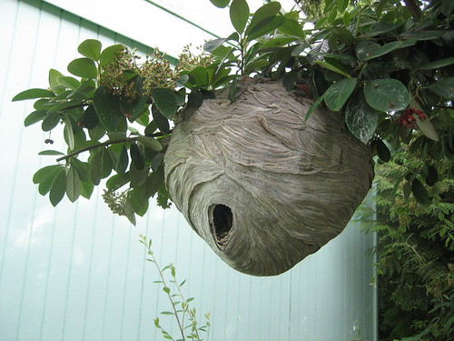 Yellowjacket's Nest