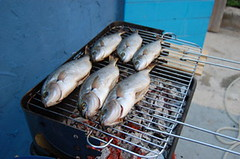 6 fat fish on the barbie