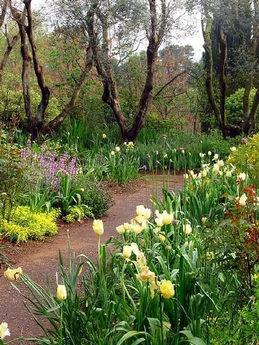 La Landriana. Il giardino degli ulivi